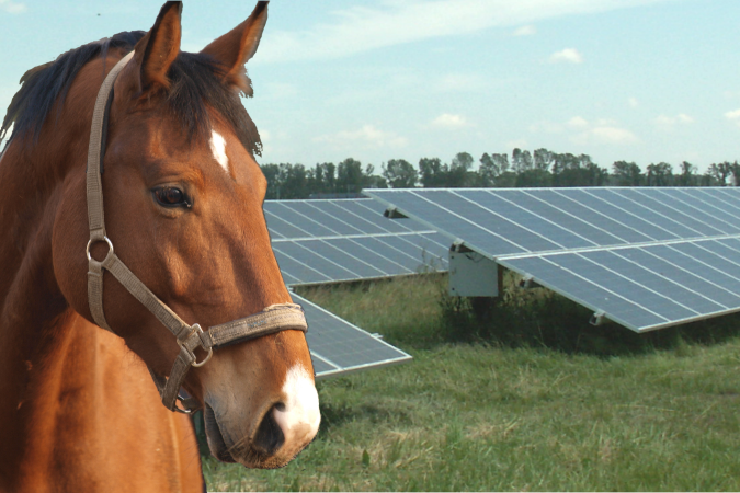 It is always important to consdider Animals and bridleways when developing a solar farm, since Glare can cause concerns