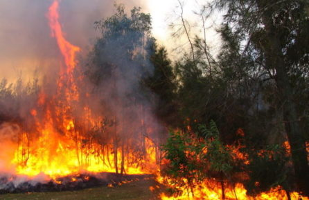 are the australian bushfires caused by climate change